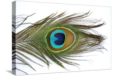 Close up of a Peacock Feather-Visage-Stretched Canvas Print