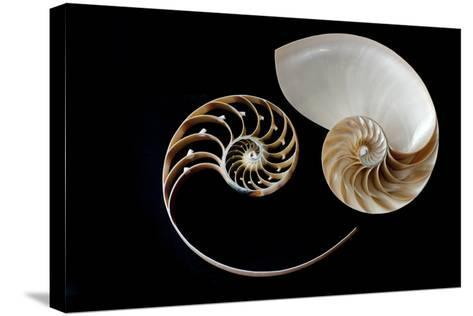 Nautilus Yin Yang-by ana_gr-Stretched Canvas Print