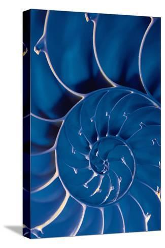 Cross-Section of Blue Nautilus Shell-Comstock-Stretched Canvas Print