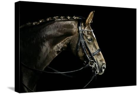 Chestnut Dressage Horse Groomed for a Contest-Anja Hild-Stretched Canvas Print