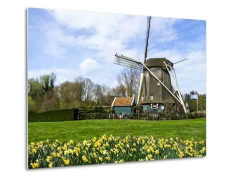 Traditional Dutch Windmill with Daffodils Field Nearby, the Netherlands-Tetyanka-Metal Print