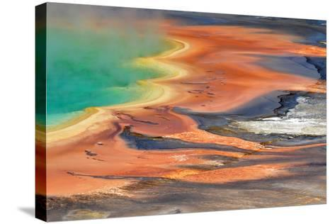 Grand Prismatic Spring Runoff-Photo by Mark Willocks-Stretched Canvas Print
