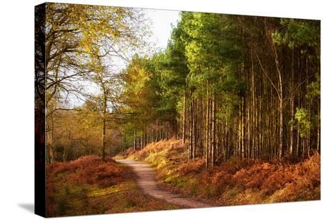 Sunlight across Trees in Cannock Chase-Verity E. Milligan-Stretched Canvas Print