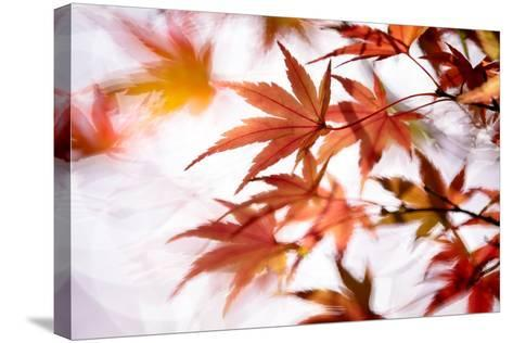 Maple-higrace photo-Stretched Canvas Print