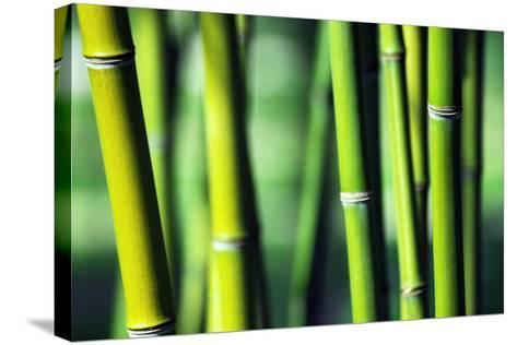 Bamboo-Joelle Icard-Stretched Canvas Print