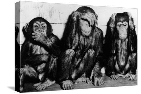 Three Wise Monkeys-Keystone-Stretched Canvas Print