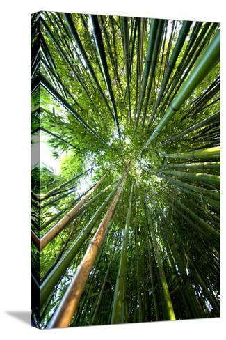 Bamboo-stevejack photos-Stretched Canvas Print