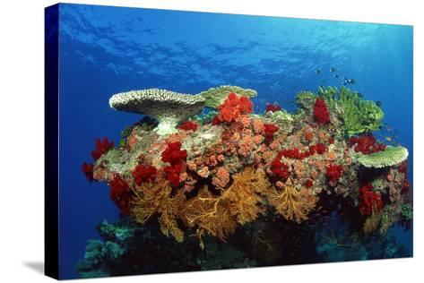 Reef Scenic of Hard Corals , Soft Corals and Tropical Fish , Malaysia-Comstock-Stretched Canvas Print