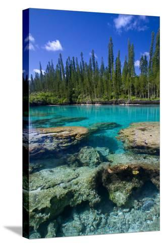 Coral and Crystal Water-Mako photo-Stretched Canvas Print