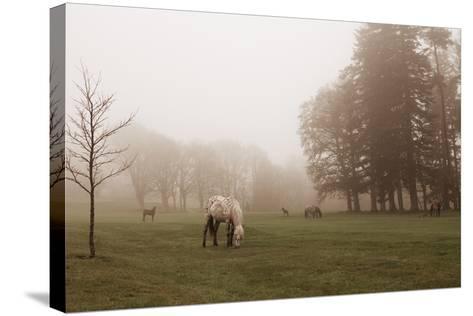 Dartmoor Ponies in Mist-Nichola Sarah-Stretched Canvas Print