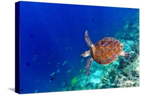 Sea Turtle-Shan Shui-Stretched Canvas Print