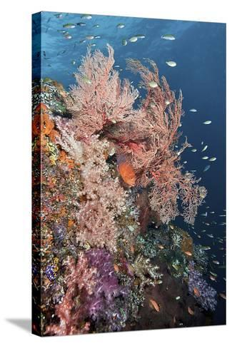 Reef Scenic and Coral Trout-Jones/Shimlock-Secret Sea Visions-Stretched Canvas Print