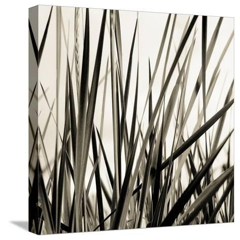 Grass and Reeds-Rica Belna-Stretched Canvas Print