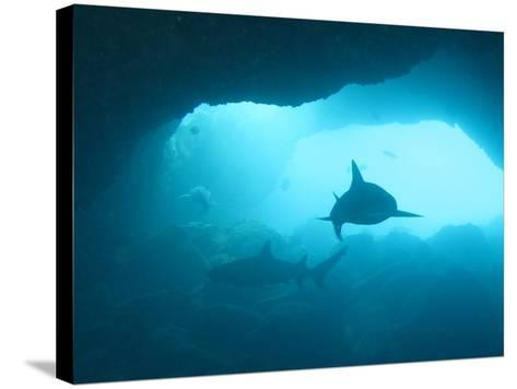 Sharks Circling in Cave-Chris Stankis-Stretched Canvas Print