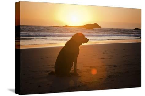Dog at Beach-Christopher Kimmel-Stretched Canvas Print