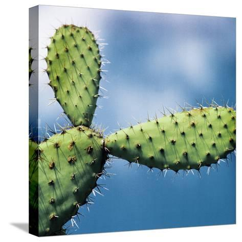 Cactus against Sky, Low Angle View-Johner Images-Stretched Canvas Print