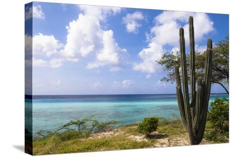 Scenic with Cactus by Coast, Mangel Halto Beach, Aruba, Lesser Antilles, Caribbean-Alberto Biscaro-Stretched Canvas Print