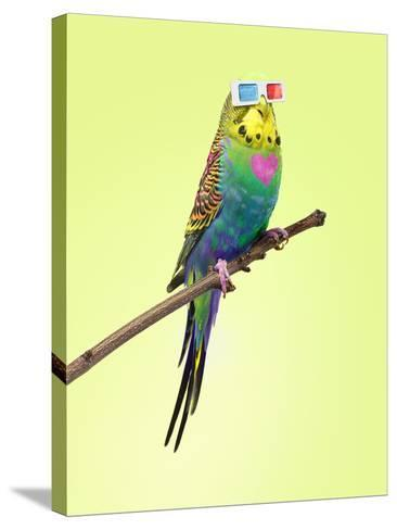 Neon Rainbow Coloured Budgie with 3D Glasses-Michael Blann-Stretched Canvas Print