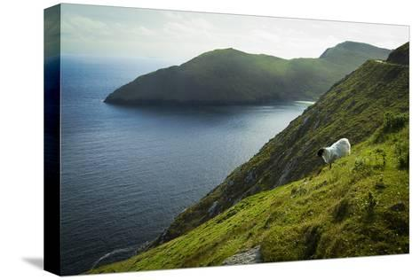 Irish Sheep-Christian Wilt-Stretched Canvas Print