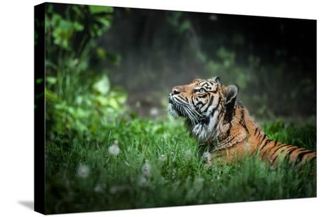 Serenity-?? Justin Lo-Stretched Canvas Print