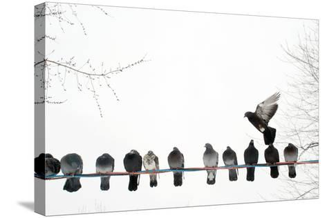 Row of Pigeons on Wire-Ernest McLeod-Stretched Canvas Print