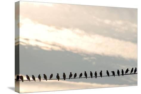Birds on a Wire-Jessica Kiser-Stretched Canvas Print