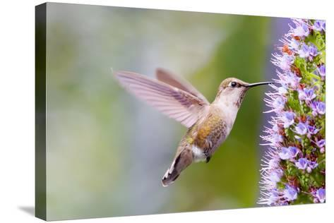 Bird-Mythungoc Photography-Stretched Canvas Print