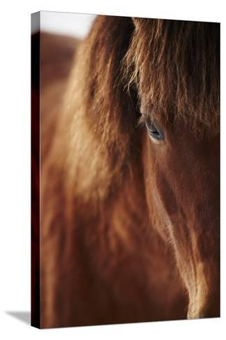 Close-Up of Horse Eye-Johner Images-Stretched Canvas Print