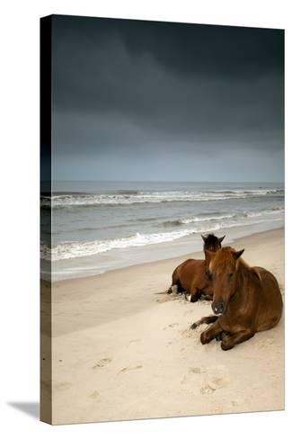 Wild Horses-photo by Edward Kreis, dK.i imaging-Stretched Canvas Print