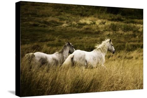Colorado Horses-Mary Hockenbery-Stretched Canvas Print