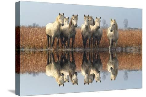 Camargue Horses-M G Therin Weise-Stretched Canvas Print