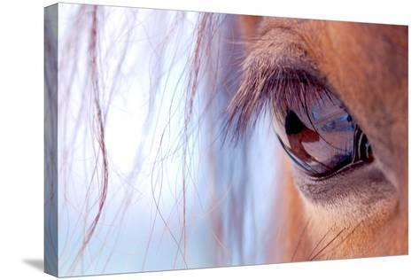 Macro of Horse Eye-Anne Louise MacDonald-Stretched Canvas Print