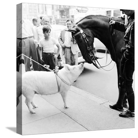 Pig and the Horse-Ecell-Stretched Canvas Print