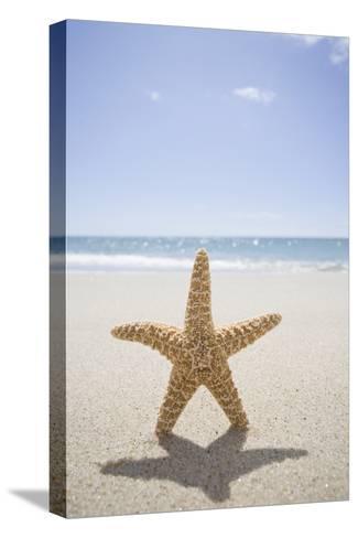 Usa, Massachusetts, Cape Cod, Nantucket, close up of Starfish on Sand-Chris Hackett-Stretched Canvas Print