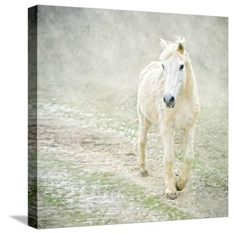 White Horse Walking along Stony Path-Christiana Stawski-Stretched Canvas Print
