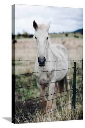 White Horse-Rafael Elias-Stretched Canvas Print