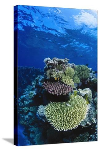 Great Barrier Reef, Australia-Radius Images-Stretched Canvas Print