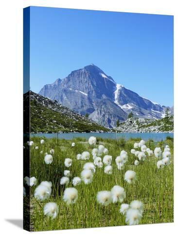 Cotton Grass and Monte Leone-Fabio Bianchi Photography-Stretched Canvas Print