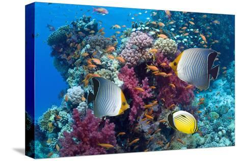 Coral Reef Scenery with Fish-Georgette Douwma-Stretched Canvas Print