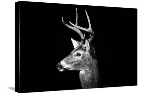 Buck in Black and White-Malcolm MacGregor-Stretched Canvas Print