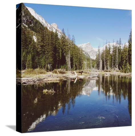 Two Moose and Trees-Kevin Russ-Stretched Canvas Print