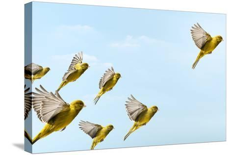 Yellow Bird Flying In-Front and Higher than Others-PIER-Stretched Canvas Print