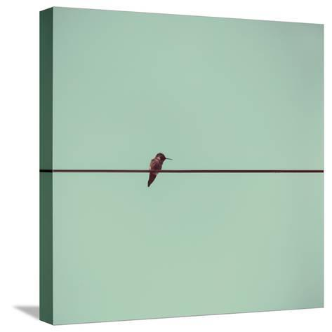 Hummingbird on a Wire-(C) Maite Pons-Stretched Canvas Print