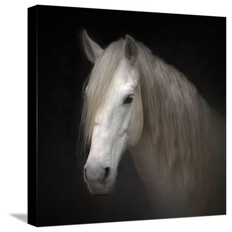 White Horse on Black-Christiana Stawski-Stretched Canvas Print