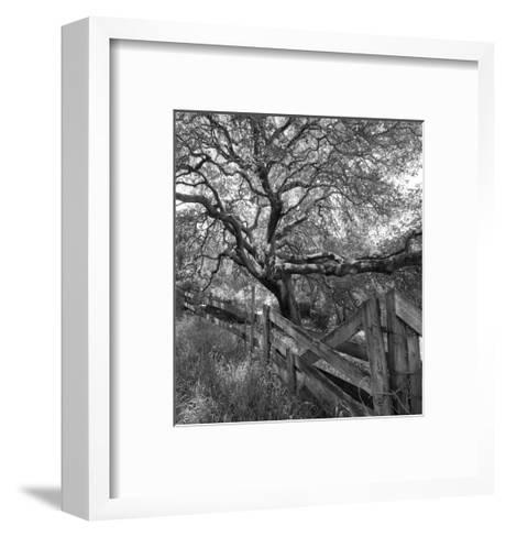 Oak Tree and Fence 2 (Native Woodland, Oakland, CA, Black and White)-Henri Silberman-Framed Art Print