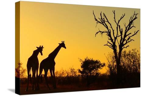 Sunrise in African Bush--Stretched Canvas Print