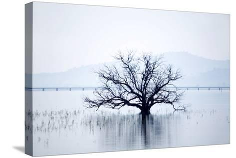 Dead Tree and High Country Rail Trail on Lake Hume-Virginia Star-Stretched Canvas Print