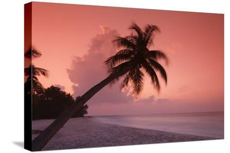 Palm on Filitheyo Island at Sunset-Massimo Pizzotti-Stretched Canvas Print
