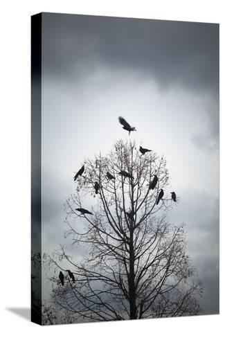 A Tree in Which Many Crows Have Rest-Hiroshi Watanabe-Stretched Canvas Print