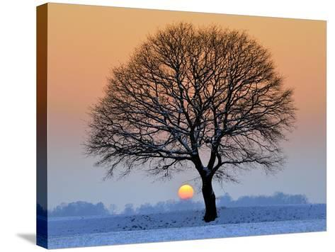 Winter Sunset with Silhouette of Tree-pierre hanquin photographie-Stretched Canvas Print